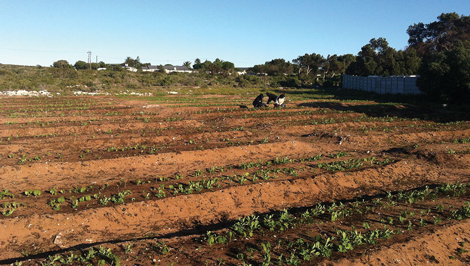 Paternoster Vegetable Garden